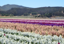 Field to Vase Dinner Tour Coming to Lompoc