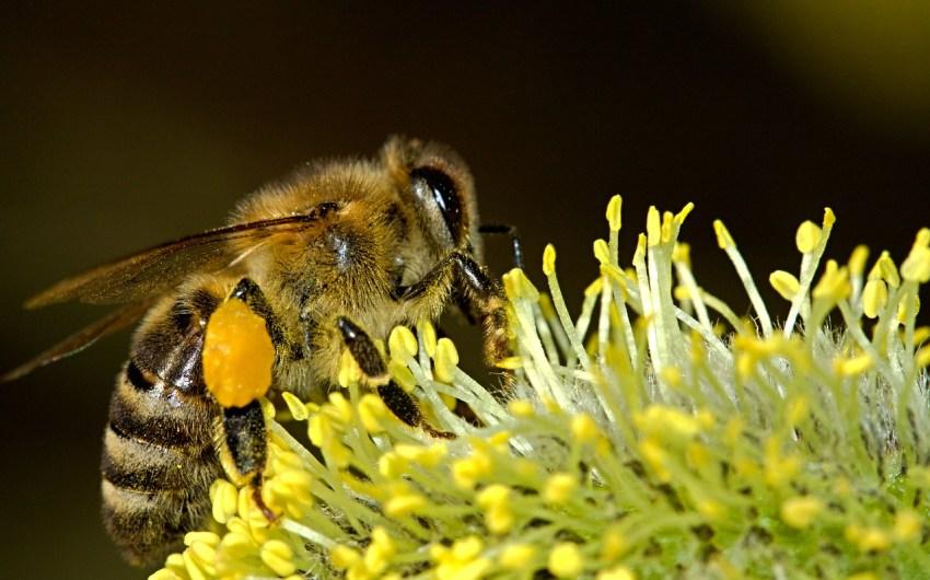 Buzz On, Honey Bees