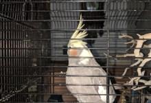 'Jail Bird' Escapes into Sheriff's Custody