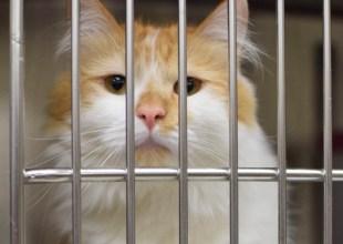 Kitten Season Means a Full Shelter