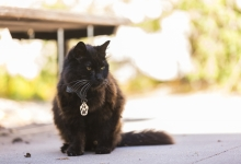 Meet Big Boy, UCSB's Campus Cat