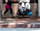 Goleta Takes Point on Solving Homelessness Issues