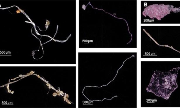 Plastics Explosion Chokes Santa Barbara Channel