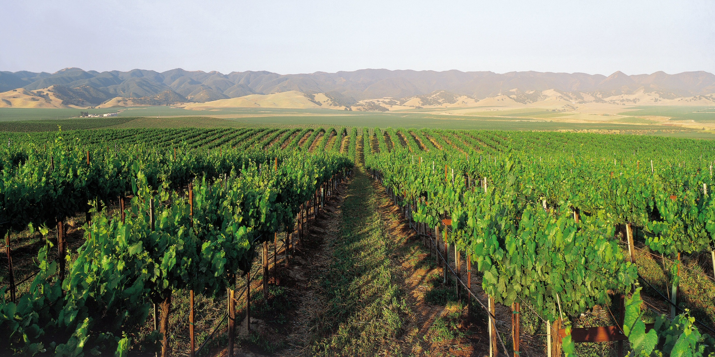 Valley Road Vineyards Appoints New ...