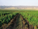 Would New Fee Empower Wine Country Marketing Efforts?