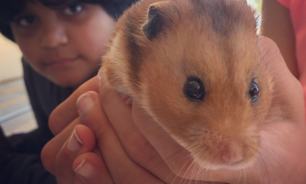 Humphrey the Hamster Sparks Kids' Love of Reading