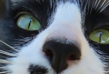 Meet Juno, the Klepto Kitty