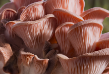 Fantastic Fungi Released Online Thursday