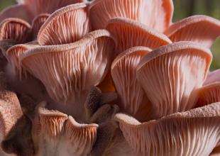 Fantastic Fungi Released Online Thursday