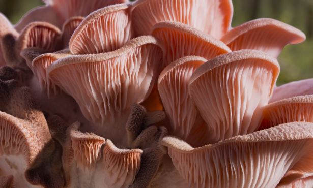 'Fantastic Fungi' Explores the Magic of Mushrooms