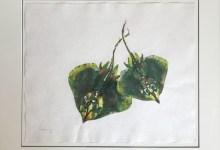 Gyotaku Art Exhibit Opens at Maritime Museum