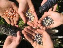 2020/12th Annual Santa Barbara Community Seed Swap