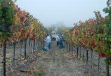 Some Santa Barbara County Vintners Cold to Wine Fee