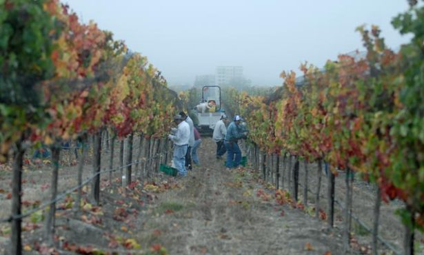 Some Santa Barbara County Vintners Cold to Wine Fee