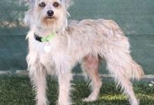 Adoptable Pet of the Week: Maggie