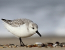 Three Billion Birds Lost: Talk with Dr. Rosenberg