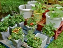 Growing Your Own Organic Goods in Small Spaces