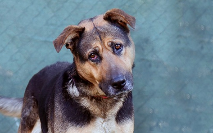 Adoptable Pet of the Week: Willow