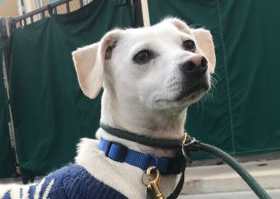 Adoptable Pet of the Week: Doby