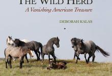 'Wild Herd: A Vanishing American Treasure'