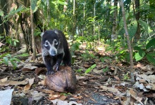 Tripping on Costa Rica's Biodiversity
