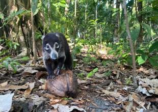 Tripping on Costa Rica's Biodiversity