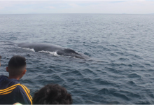 Hands-On Learning in the Santa Barbara Channel