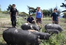 Gaviota Givings Delivers Ranch-Raised Pork