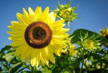 Santa Barbara's Best Bee-Friendly Gardens