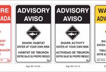 Shark Lab Tags Eight White Sharks off Carpinteria's Coast