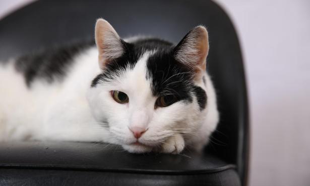 Cap'n, Home Office Cat