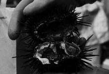 Urchin Diving & the Coronavirus