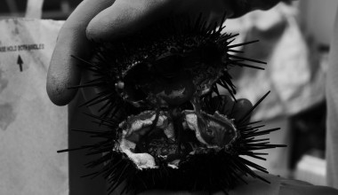 Urchin Diving & the Coronavirus