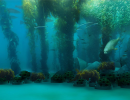ONLINE: The Goleta Kelp Reef Restoration Project