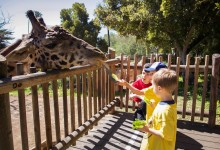 Santa Barbara Zoo to Reopen on June 23