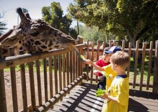 Santa Barbara Zoo to Reopen on June 23