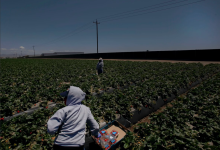 $200,000 to Aid Farmworker Health During Pandemic