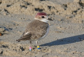 Carpinteria Birdwatchers Virtual Meetings