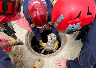 Firefighters Rescue Dog Trapped in Drainpipe for Three Days