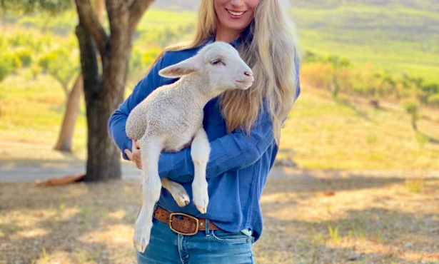 Meet Clover the Lamb