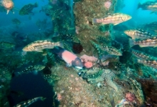 Fishermen and Researchers Consider Rig Removals