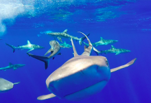 Sharks are Functionally Extinct on Many of the World's Reefs