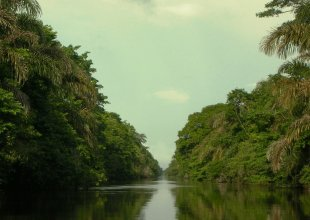 Reversing Deforestation: Costa Rica Is Showing the Way