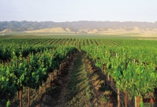 Santa Barbara Vintners Present Self-Taxing Idea to County Supervisors
