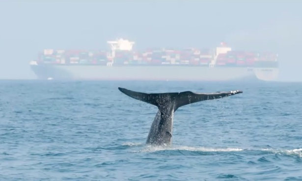 'Whale Safe' Unleashed to Protect Cetaceans from Ship Collisions