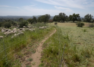 Campaign to Preserve Foothills Receives $1 Million Donation