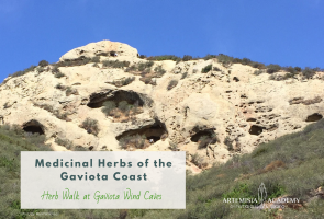 Herb Walk at Gaviota Wind Caves
