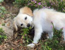 Why Are So Many Folks Hankering for a Pandemic Pup?