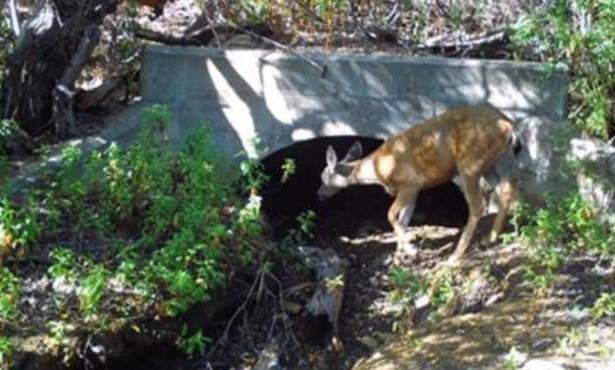 Underground Wildlife Crossing Dispute Renewed