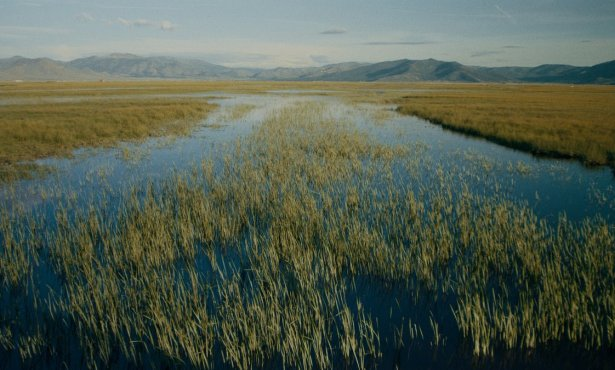 NatureTrack Film Festival Goes Virtual